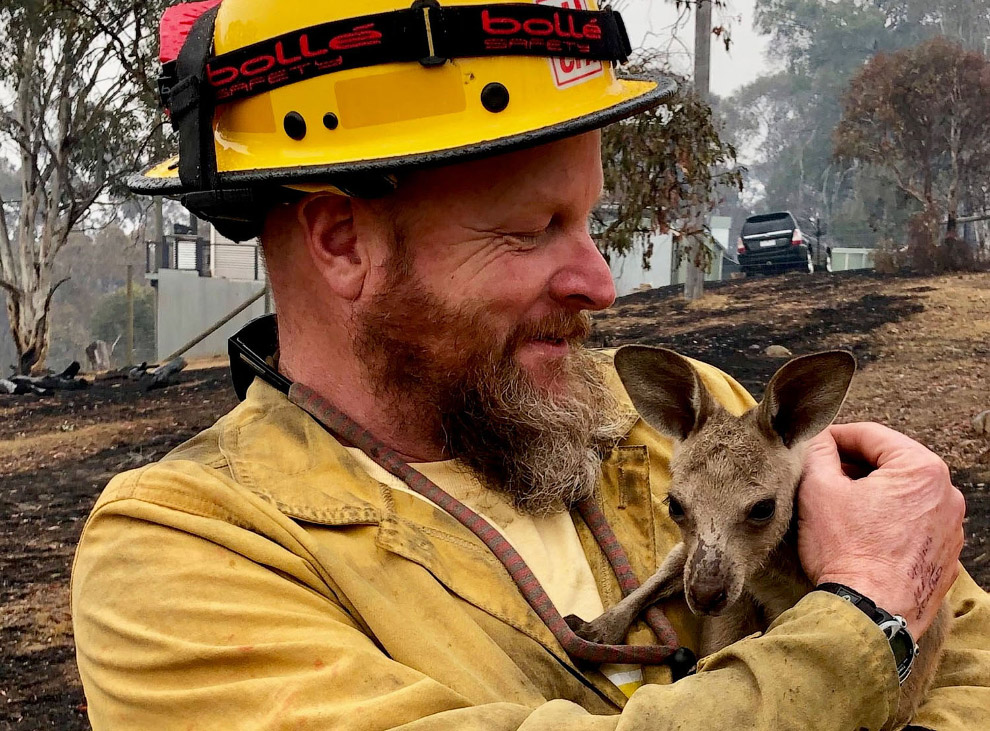 Kangaroo is rescued from a forest fire in Kobungra, Australia