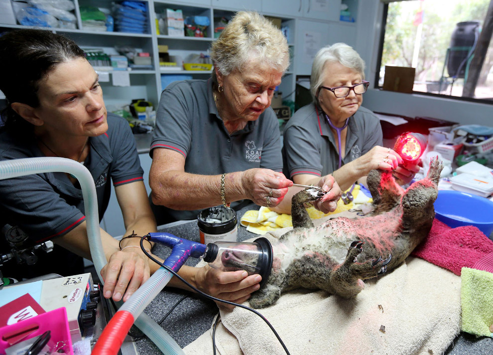 The operation in the burn center.  Patient - koala