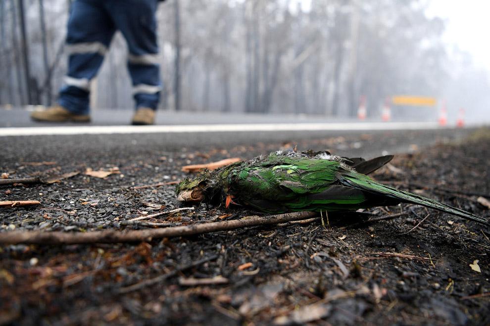 The deceased parrot