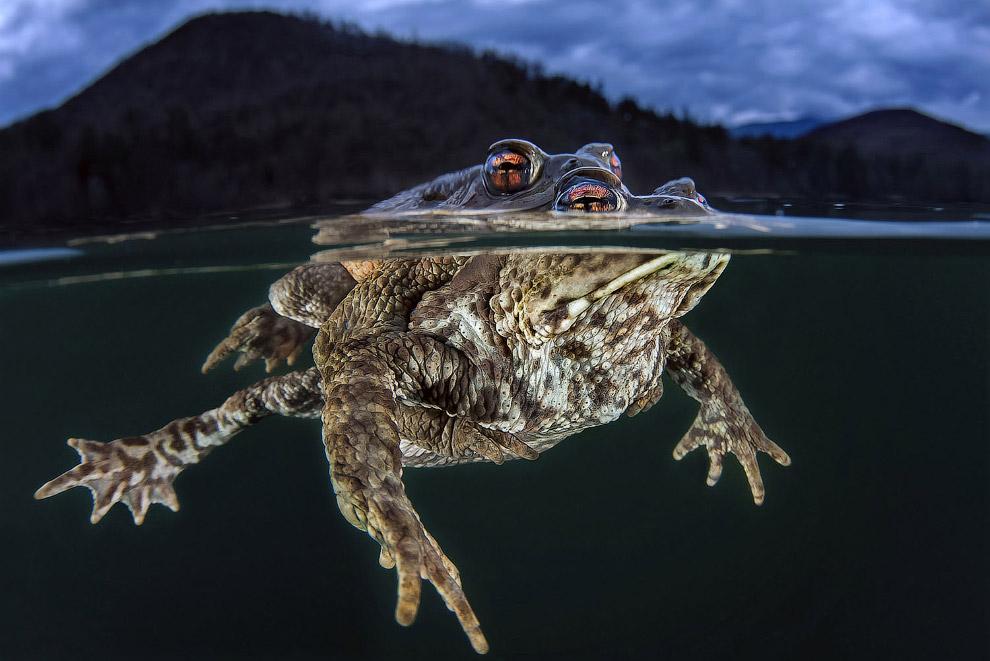 Чем отличаются жабы и лягушки