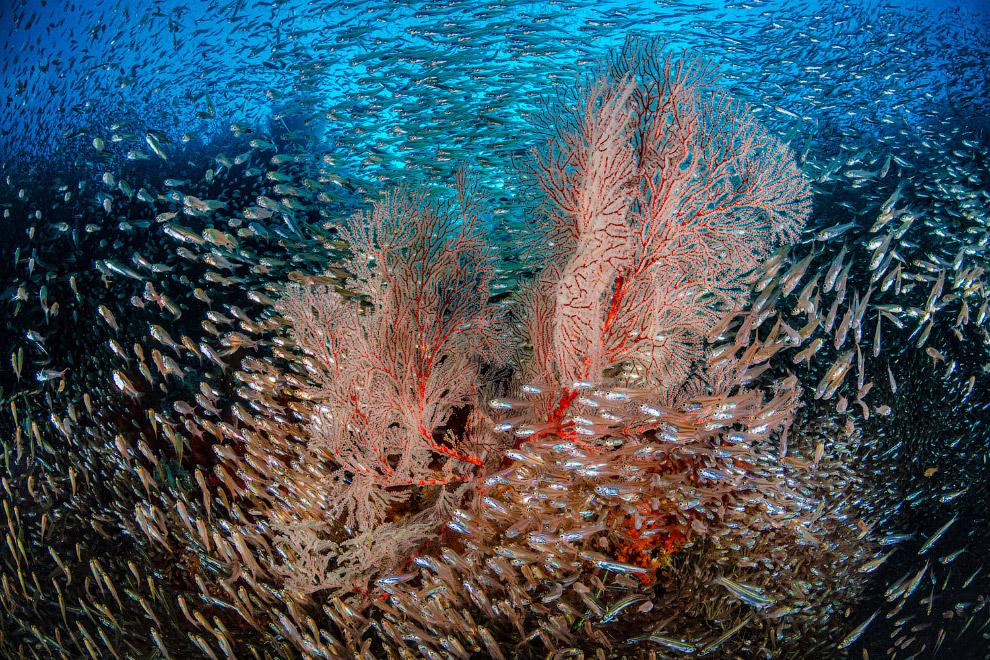 Життя біля рифу