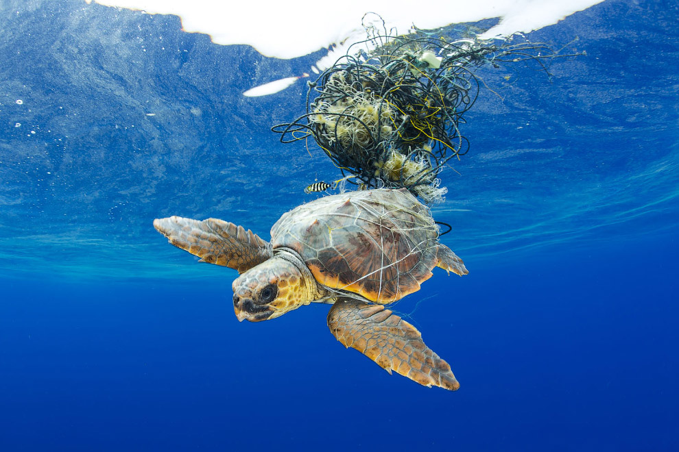 Морская черепаха,  Канарские острова, Испания