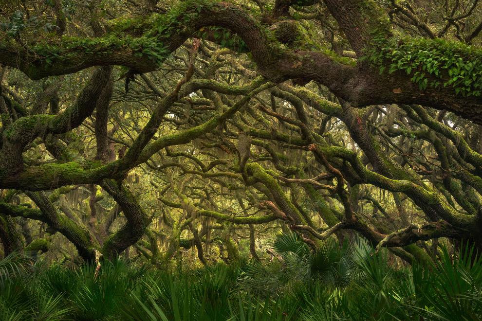 Живописный лес на побережья острова Камберленд