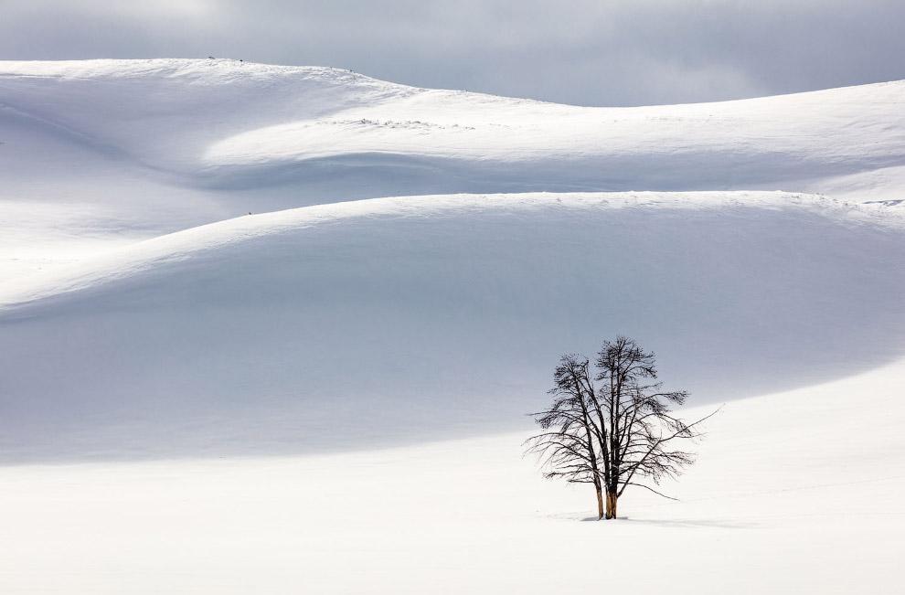 Black tree and white landscape in Hayden Valley