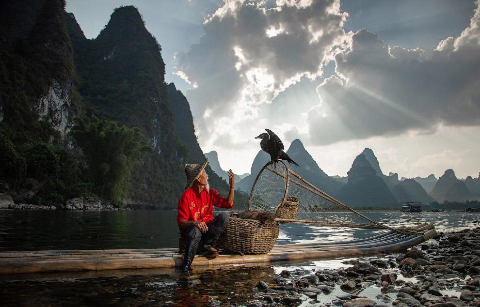 Рыбак и баклан рыбачат вместе в Гуйлине, Китай