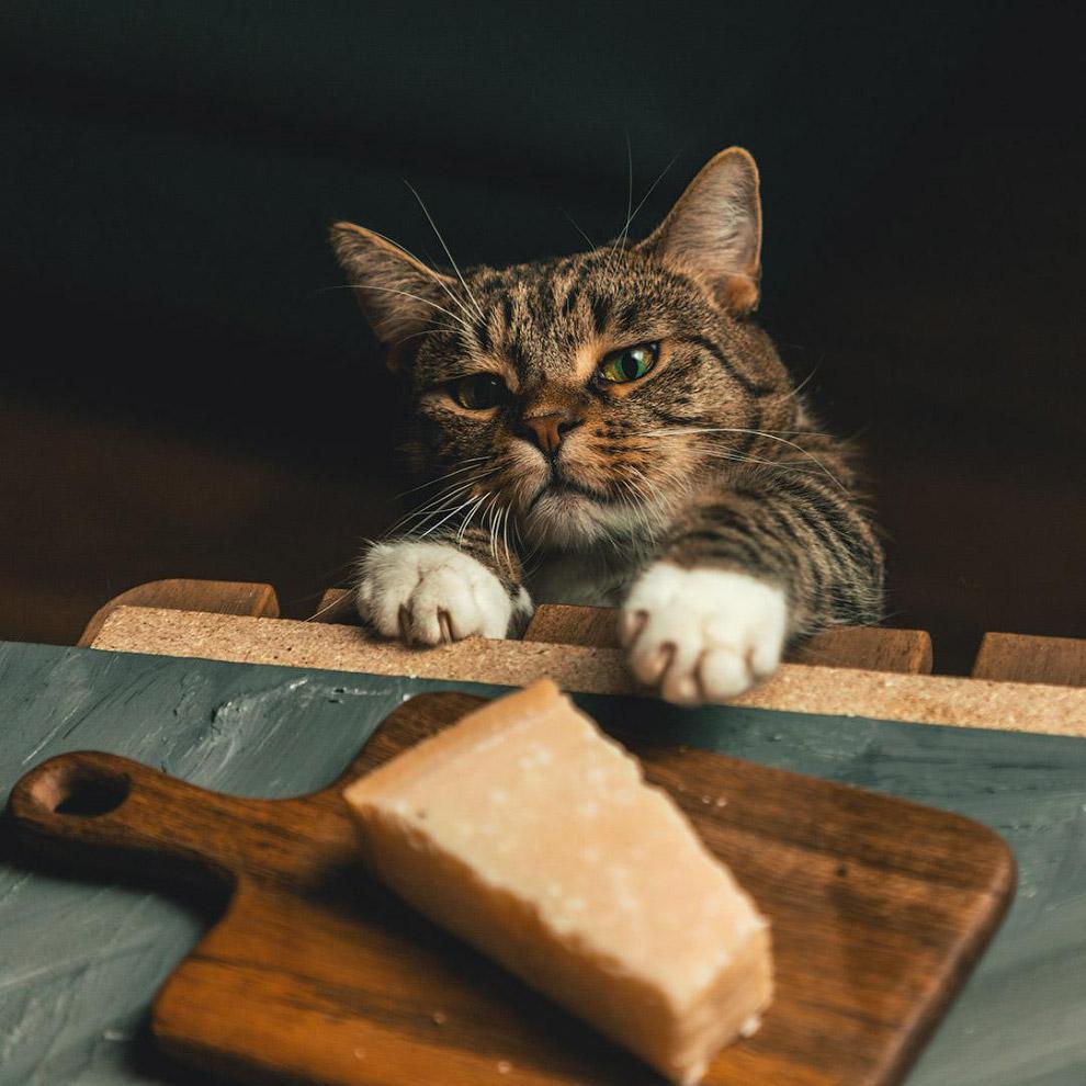 Кошка пытается украсть сыр