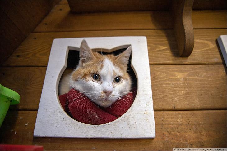 Коты в Калининграде. Нашествие.