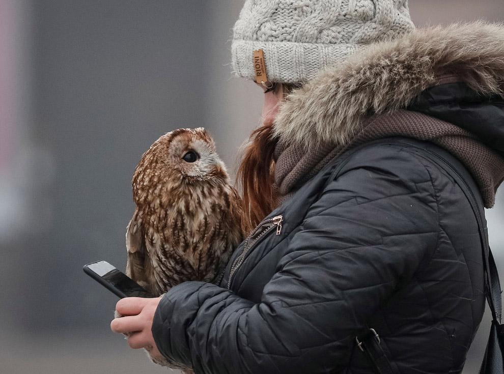 Хозяйка таскает на улицу сову для фотографирования