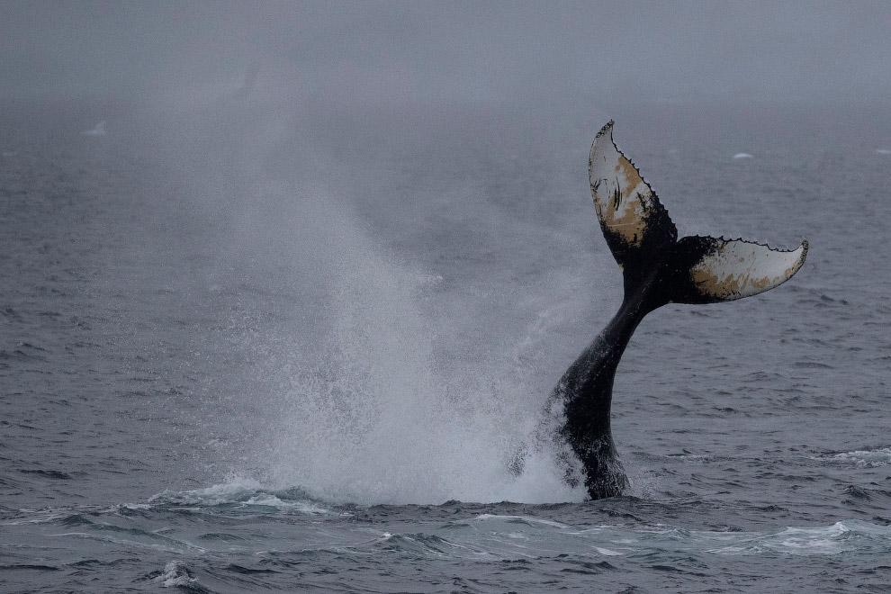 Здесь и киты есть