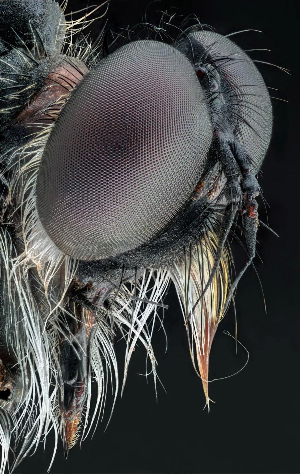 Бабочка крупным планом