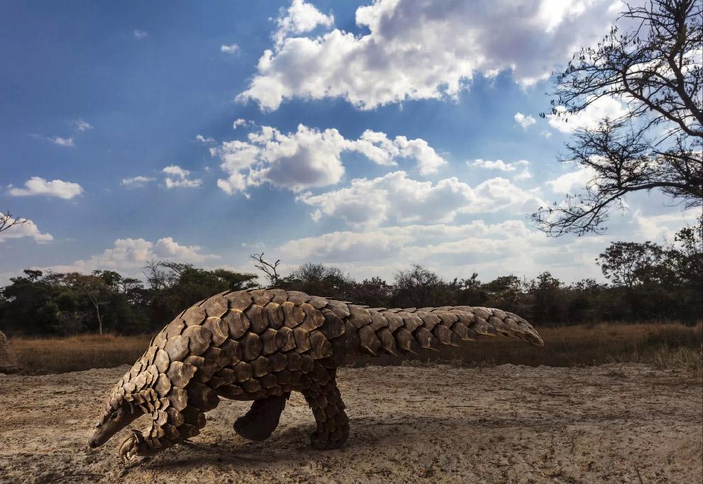 Панголины, или ящеры — отряд плацентарных млекопитающих