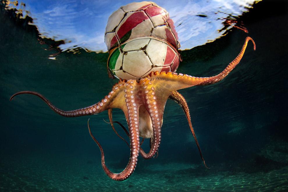 Осьминог и футбольный мяч