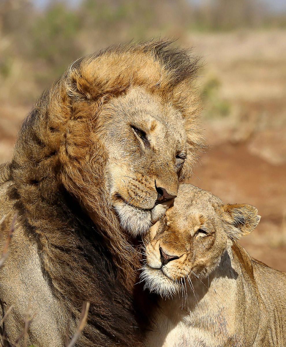Цари зверей