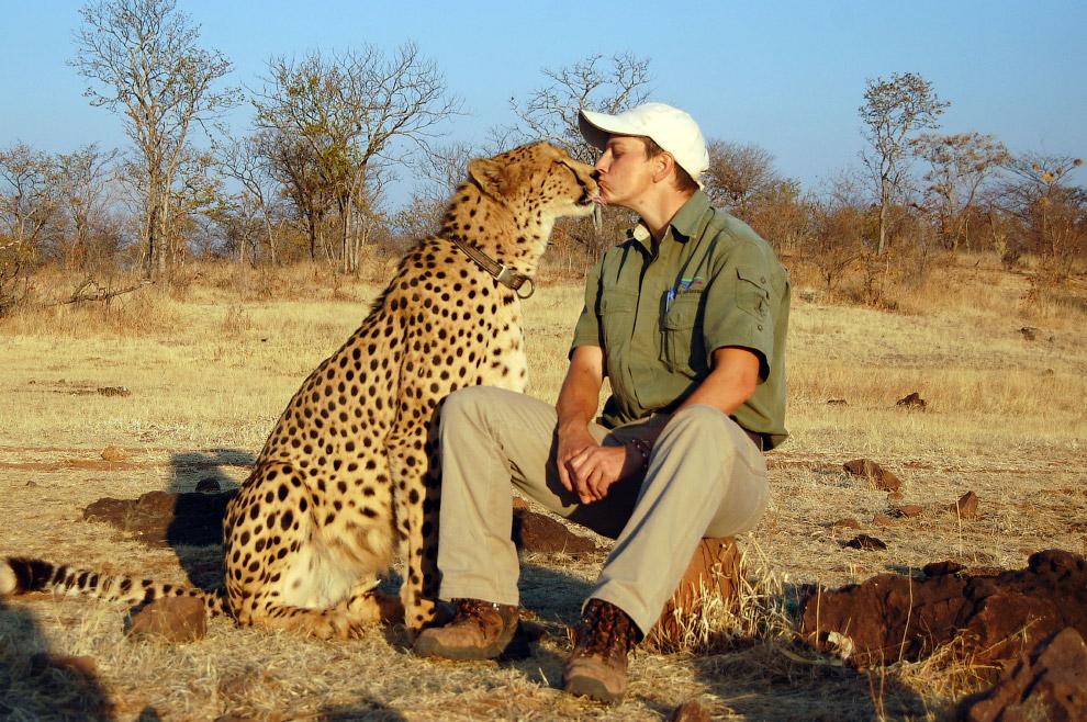 Человек и гепард