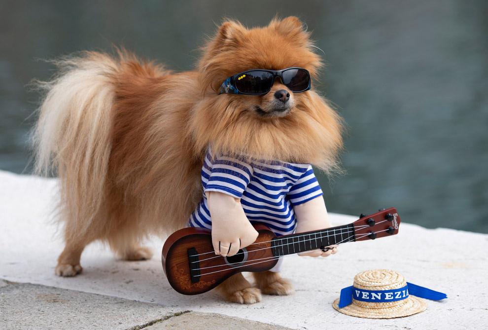 Собака в Венеции