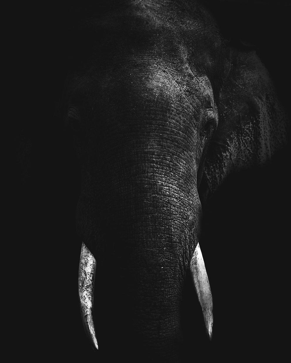 Слон в темноте