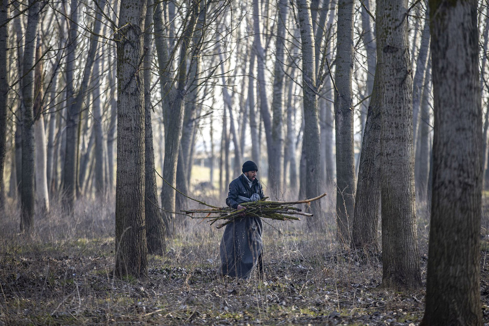 Мигранты собирают дрова для костра на границе