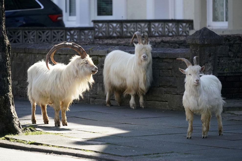Английский городок Лландидно в Уэльсе