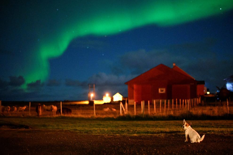 Собака любуется сиянием в Норвегии