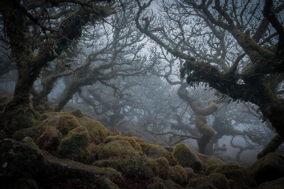 В Англии есть Лес Вистмана