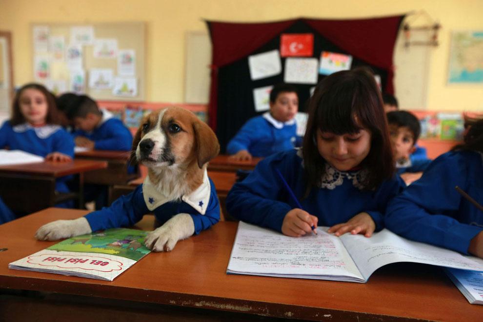 На уроке в школе в Токае, Турция