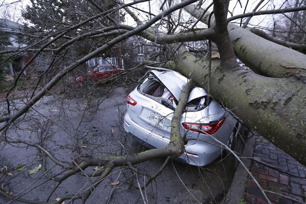 Автомобиль, раздавленный деревом