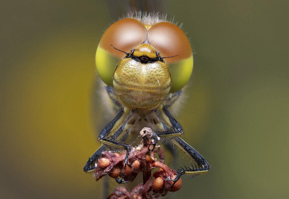 Фотография стрекозы