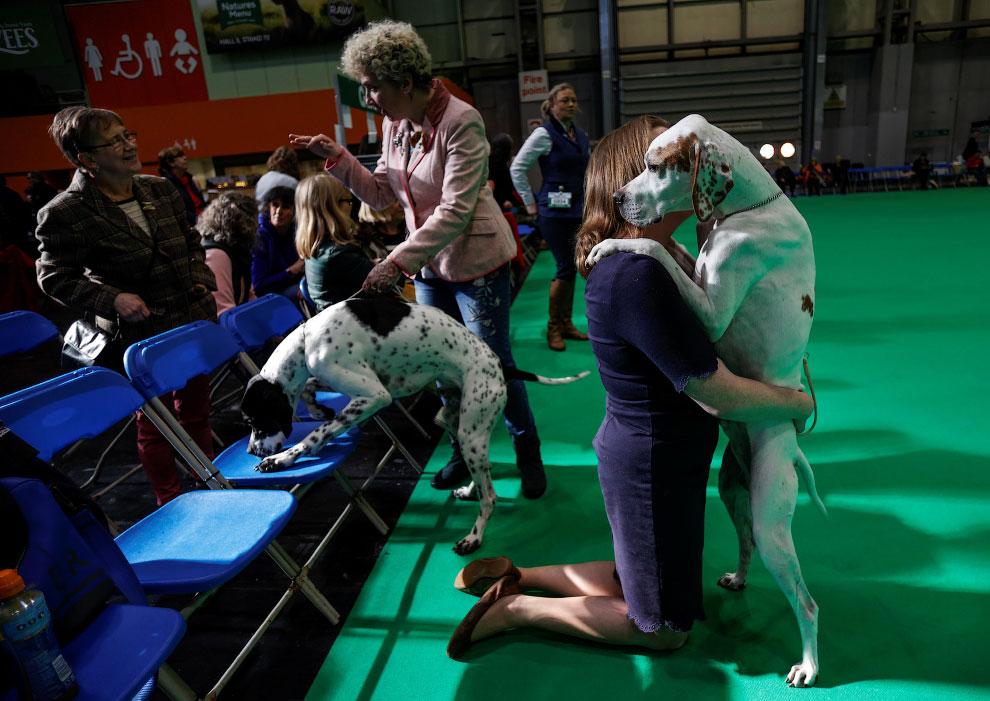 Настоящие друзья. Выставка собак в Бирмингеме, Великобритания