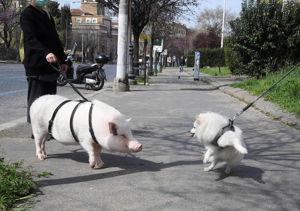 На прогулке в Риме, Италия