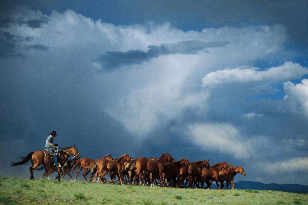 Пастухи-ковбои