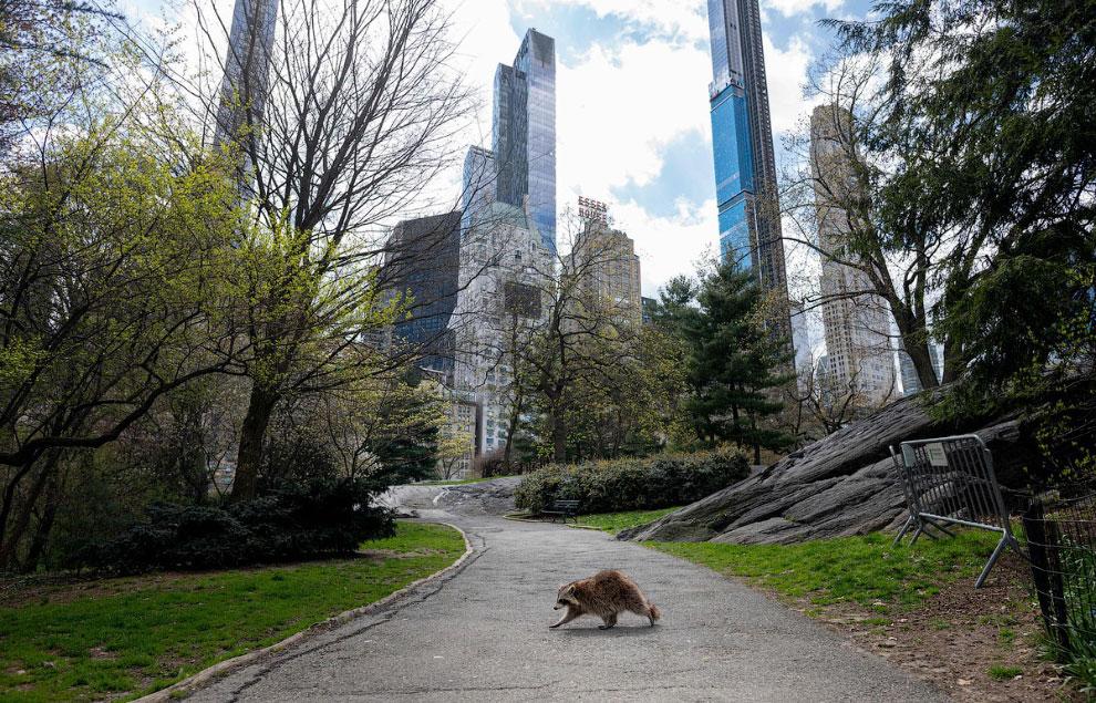Безлюдный Центральный парк на Манхэттене