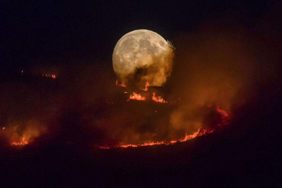 Луна и горящие леса, Англия