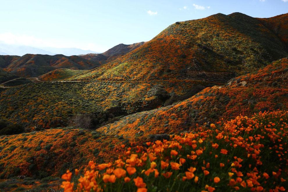 Цветущие холмы, штат Калифорния