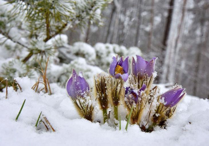Цветущие полевые цветы на Украине