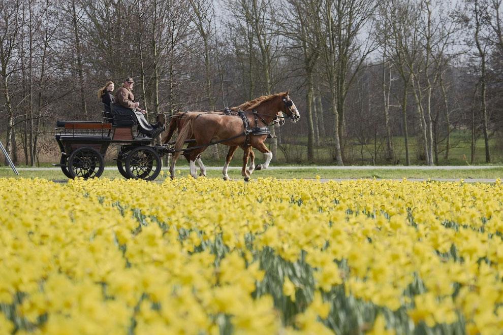Цветы в Гааге, Нидерланды
