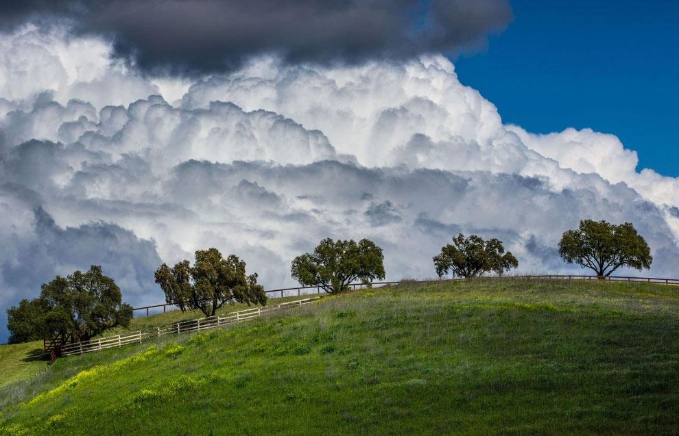 Весенние луга в Калифорнии