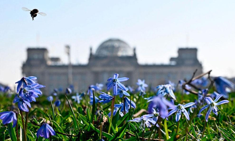 Шмель на фоне Рейхстага в Берлине