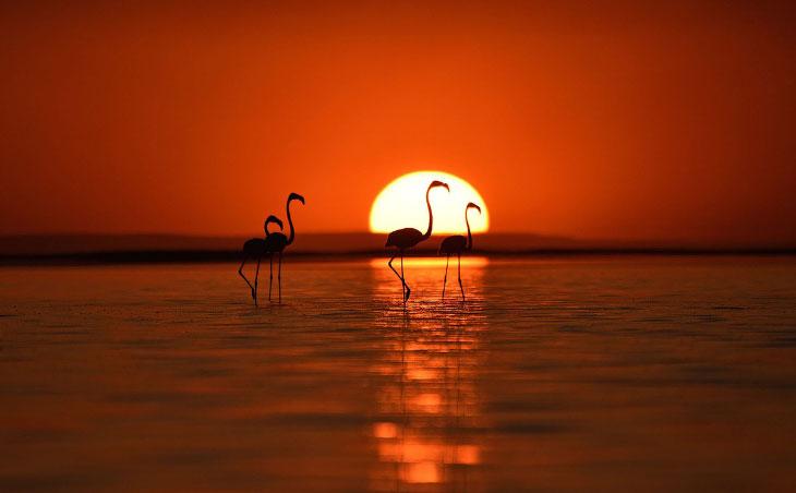 Танцы фламинго