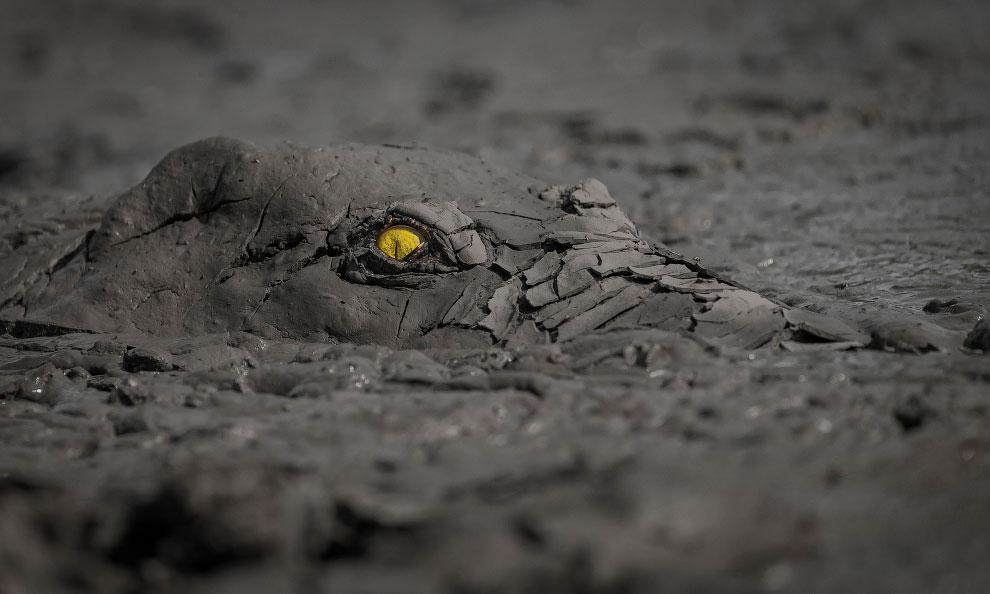 Маскировка. Крокодил