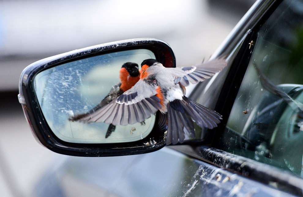 GERMANY-WEATHER-NATURE-BIRD
