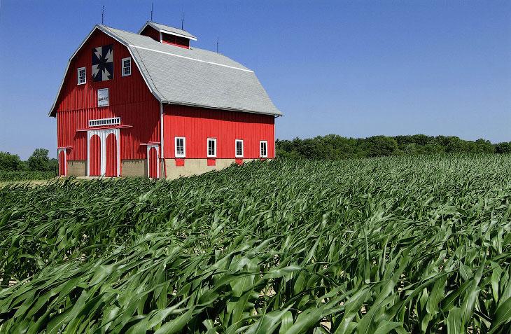 Поля кукурузы