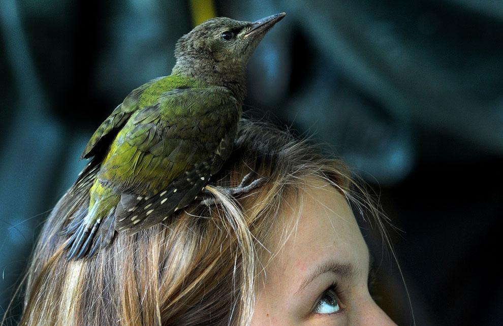 RUSSIA-BIRDS-FEATURE