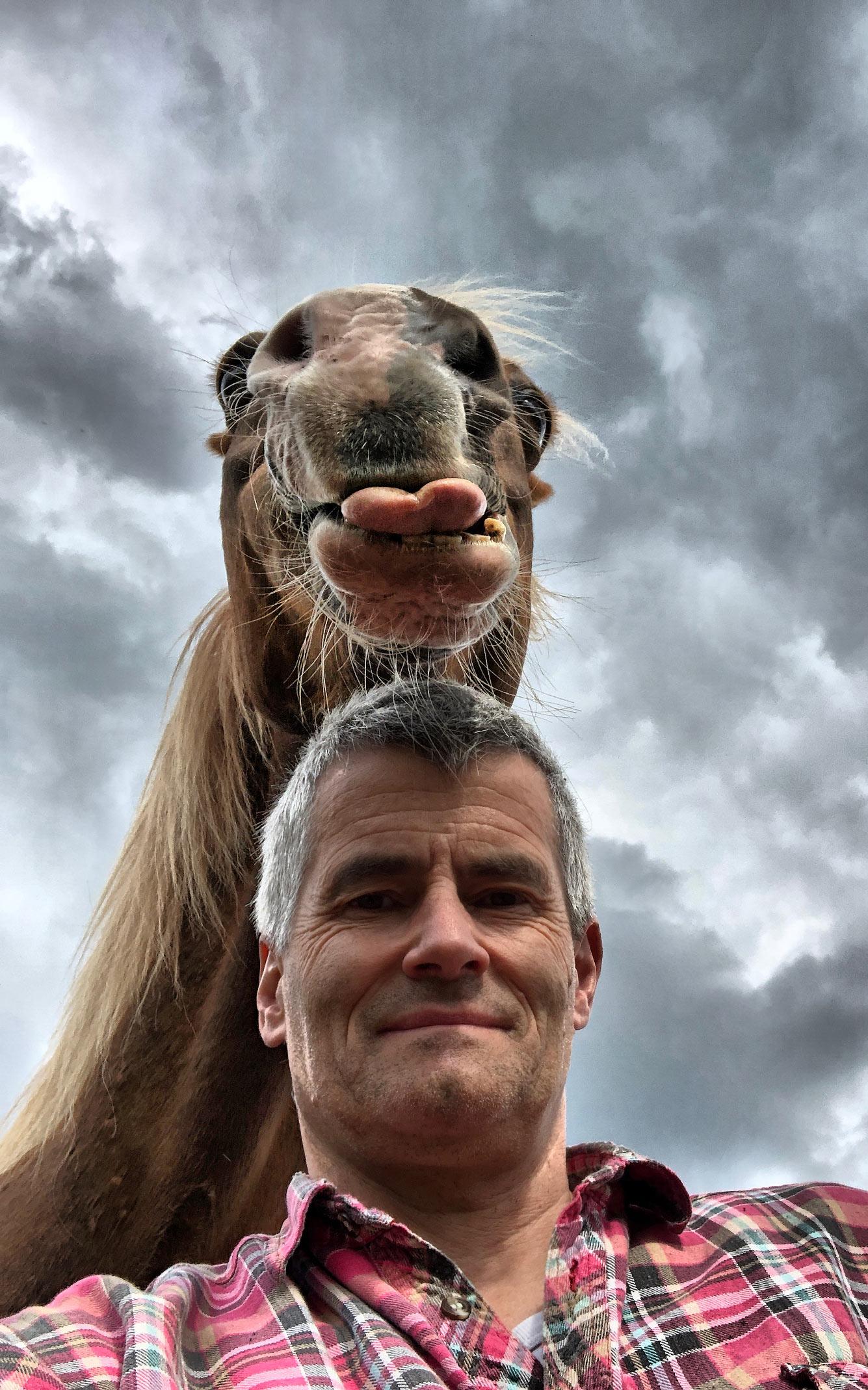 Веселая лошадь
