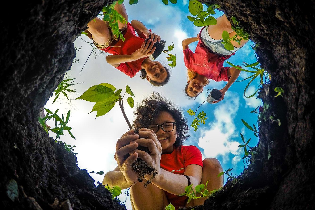 Посадка новых деревьев, Филиппины