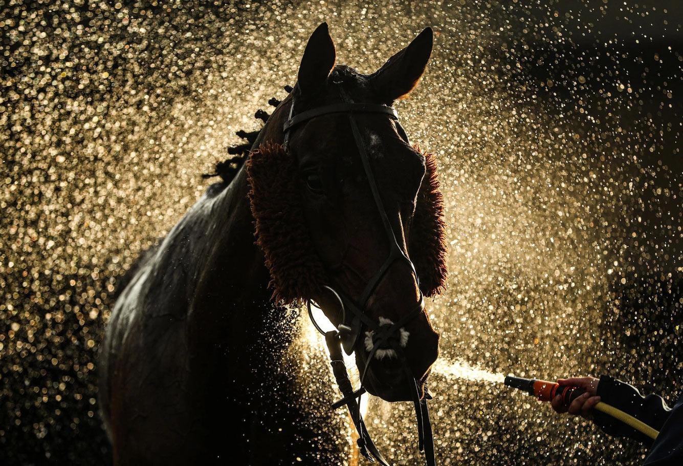 Лошадь на ипподроме в Уорике, Англия