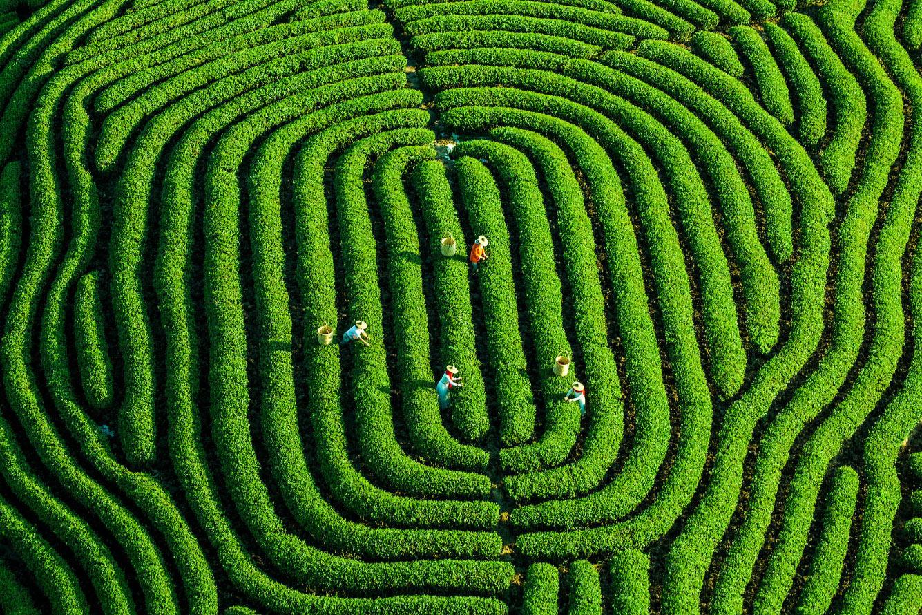 Геометрия сельского хозяйства