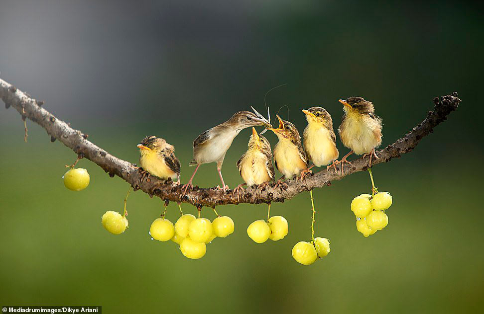 Мама кормит птенцов