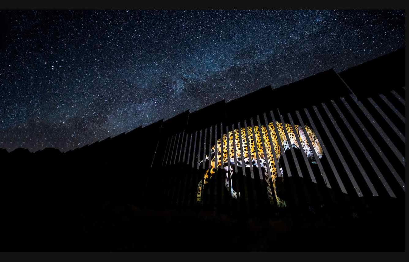 Леопард на границе с Мексикой