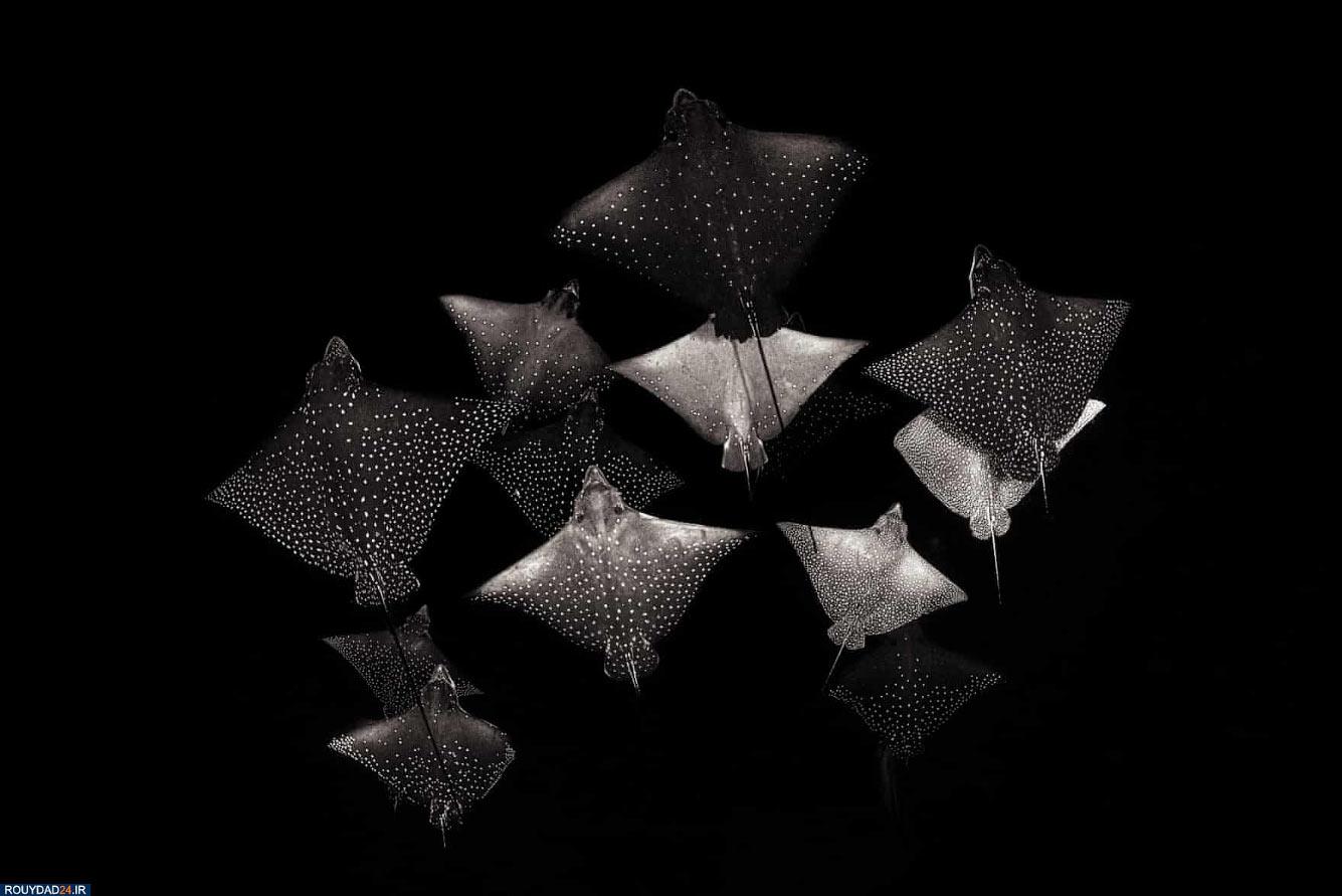 Группа скатов
