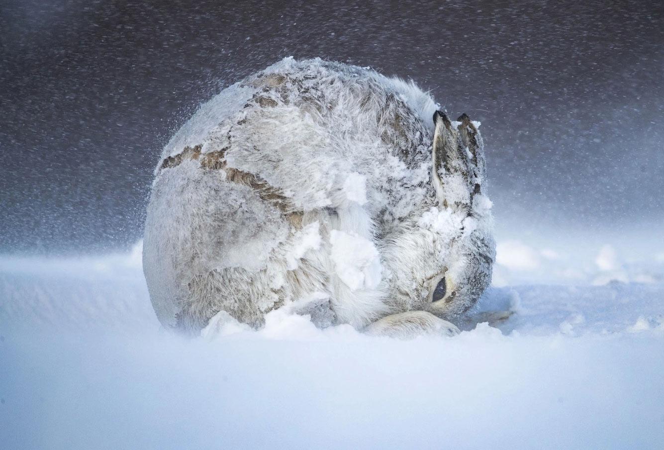 Зайчик и зимняя стужа